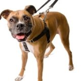 Freedom No Pull Dog Harness, Harness ONLY (Blue, Small)
